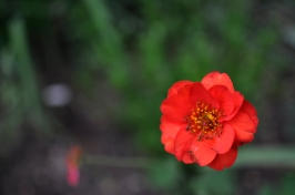 Single Flower 7