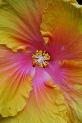Single Flower 4